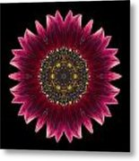 Sunflower Moulin Rouge I Flower Mandala Metal Print by David J Bookbinder
