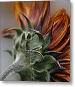 Sunflower Metal Print by Sharon Mau
