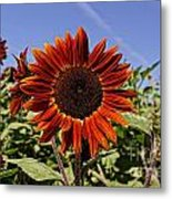 Sunflower Sky Metal Print by Kerri Mortenson
