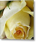 Sunkissed Yellow Rose Metal Print by Danielle  Parent
