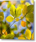 Sunlit Autumn Leaves Metal Print by Natalie Kinnear
