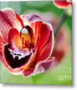 Sunlit Miniature Orchid Metal Print by Kaye Menner