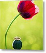 Sunlit Poppy Metal Print by Natalie Kinnear