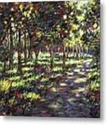 Sunlit Trees Metal Print by John  Nolan