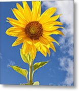 Sunny Sunflower Metal Print by Joshua Clark