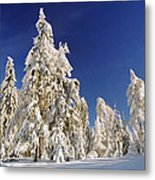 Sunny Winter Day Metal Print by Aged Pixel