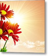 Sunrays Flowers Metal Print by Carlos Caetano