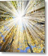 Sunrays In The Forest Metal Print by Elena Elisseeva