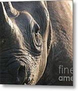 Sunrise Rhino Metal Print by Alison Kennedy-Benson