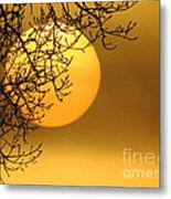 Sunrise Through The Fog Metal Print by David Lankton