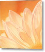 Sunshine Metal Print by Scott Norris