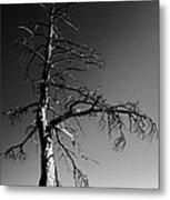 Survival Tree Metal Print by Chad Dutson