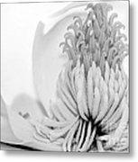 Sweet Magnolia Metal Print by Sabrina L Ryan