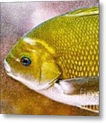 Swimming Fish  Metal Print by Artist and Photographer Laura Wrede