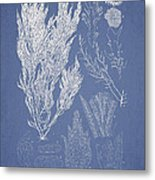 Symphocladia Linearis Metal Print by Aged Pixel