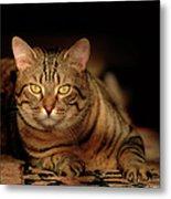 Tabby Tiger Cat Metal Print by Renee Forth-Fukumoto