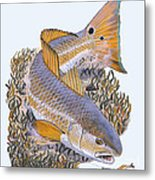 Tailing Redfish Metal Print by Carey Chen
