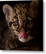 Taking A Licking Metal Print by Ashley Vincent