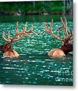 Talbot Lake Elk Metal Print by Terry Elniski