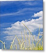 Tall Grass On Sand Dunes Metal Print by Elena Elisseeva