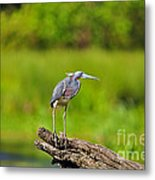 Tantalizing Tricolored Metal Print by Al Powell Photography USA