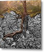 Taproot Metal Print by Mary Jo Allen