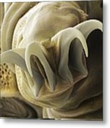 Tardigrade Or Water Bear Foot Sem Metal Print by Science Photo Library