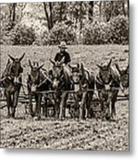 Team Of Eight Metal Print by Guy Whiteley