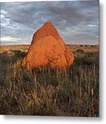 Termite Mound, Exmouth Western Metal Print by Science Photo Library