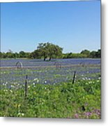 Texas Blue Bonnets Metal Print by Shawn Marlow