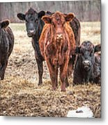 The Angry Cows Metal Print by Gary Heller