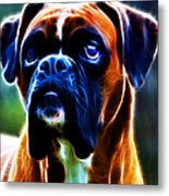 The Boxer - Electric Metal Print by Wingsdomain Art and Photography