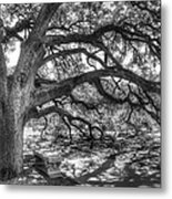 The Century Oak Metal Print by Scott Norris