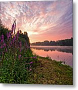 The Color Purple Metal Print by Davorin Mance
