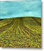 The Corn Rows Metal Print by Julie Dant