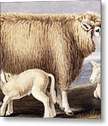 The Cotswold Breed Metal Print by David Low