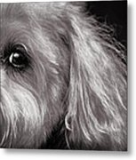 The Dog Next Door Metal Print by Bob Orsillo