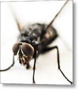 The Fly Metal Print by Marco Oliveira