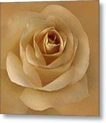The Golden Rose Flower Metal Print by Jennie Marie Schell