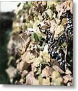 The Grapevines Metal Print by Lisa Russo