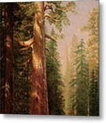The Great Trees Mariposa Grove California Metal Print by Albert Bierstadt