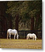 The Horse And The Pony - Standard Size Metal Print by Mary Machare