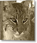 The Hunter - Sepia Metal Print by Jennifer  King