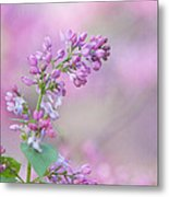 The Lilac Metal Print by Kay Pickens