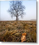 The Lone Oak Metal Print by Davorin Mance