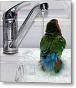 The Lovebird's Shower Metal Print by Terri Waters
