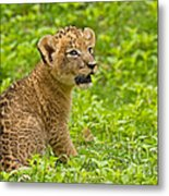The Markings Of Youth Metal Print by Ashley Vincent