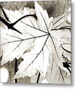 The Mysterious Leaf Abstract Bw Metal Print by Andee Design