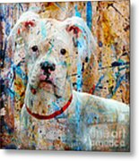 The Painter's Dog Metal Print by Judy Wood