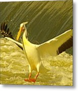 The Pelican Lands Metal Print by Jeff Swan
